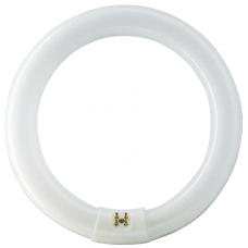 Tub FluorescentCircular T9 / P[W]: 32